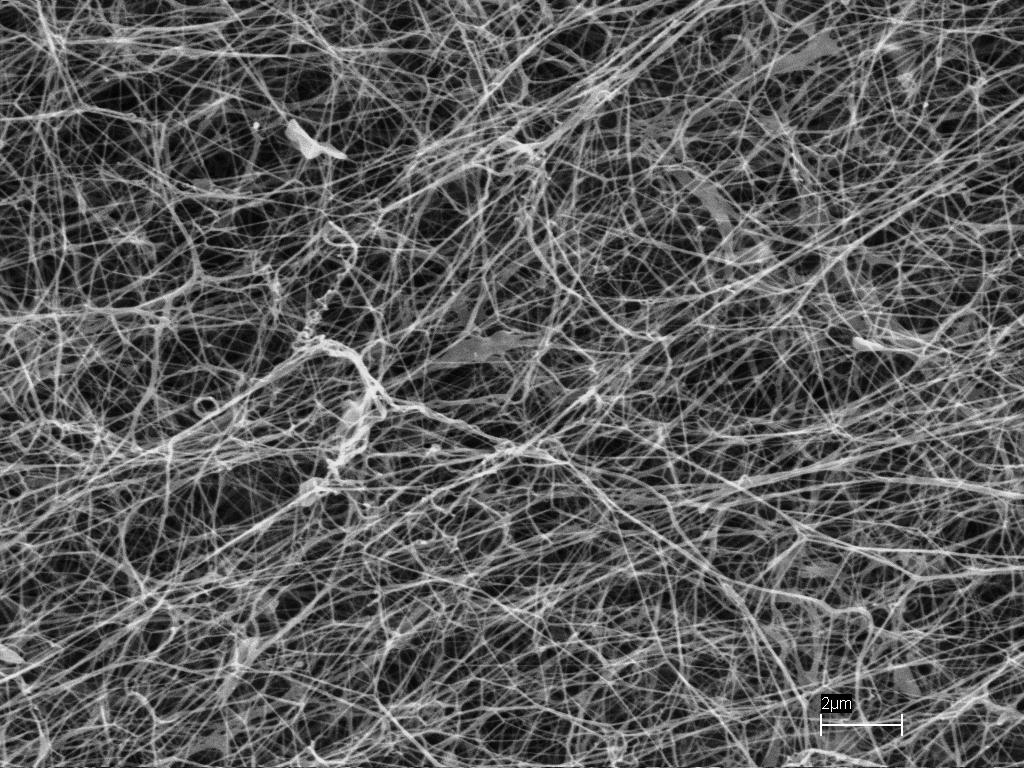 Agrobacterium And Cellulose Fibers  U2013 Or Cotton
